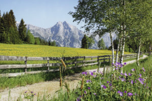 Leutasch_Neuleutasch_SommerwiesSeefeld Tirol-Hotlel-Sommerurlaub-WanderSeefeld Tirol-Hotlel-Sommerurlaub-Wandern-n
